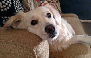 hond-op-bank