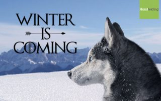 winter-is-coming-hond