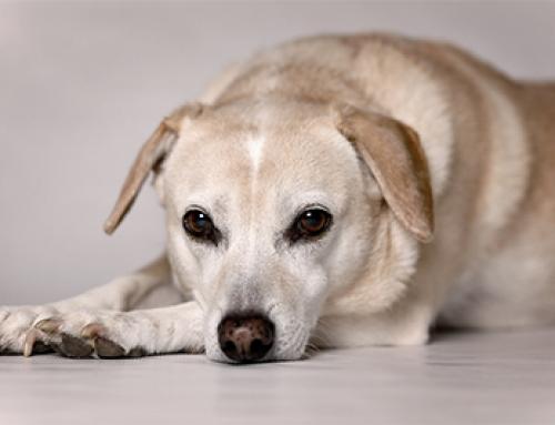 De top 10 hondennamen