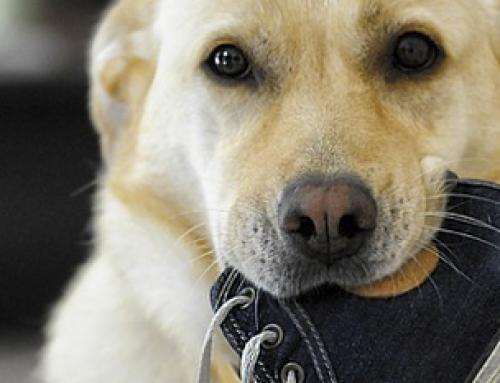Waarom je beter geen 'nee' kunt zeggen tegen je hond