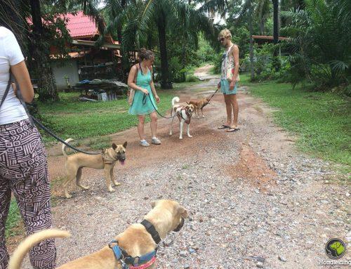 Blog: hondenopvang op een tropisch eiland