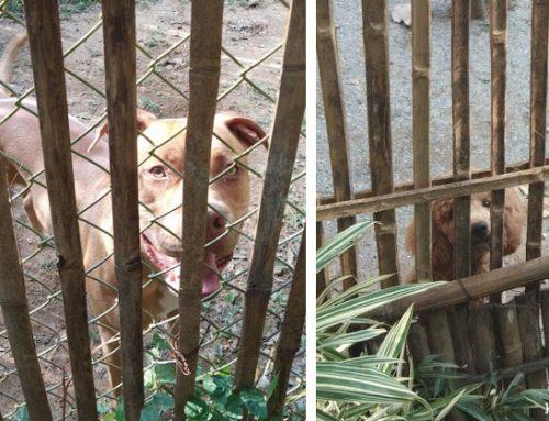 Op bezoek bij een hondenschool in Thailand
